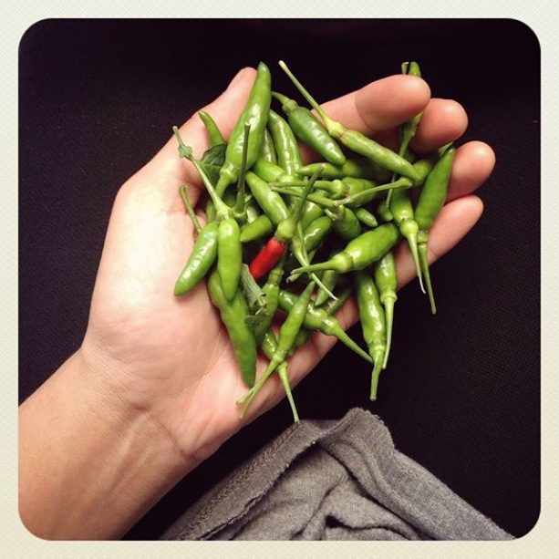 Just look at all that cili padi! Harvested straight from our Gasing garden