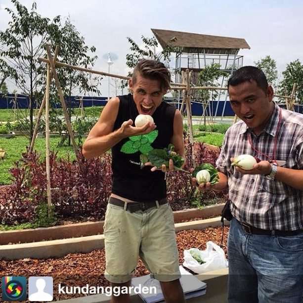 The Kundang Estate edible garden is coming to life! Nick & Fazreen gathering some harvests 2.5 months after our first sowing together with the @gamudaland team, at Kundang Estates. @eatsshootsandroots collaborated with @gamudaland to start and manage the edible garden! Follow @kundanggarden for weekly updates on the garden. from @kundanggarden Happy harvesters Week 10; 1 Sept 2016