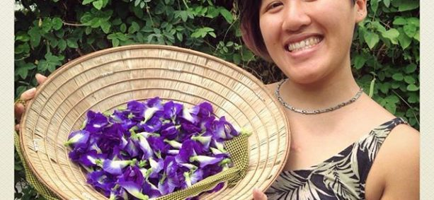 After lunch Christabel went on a Butterfly Pea (Bunga telang / Clitoria ternatea) picking spree! This easygrowing leguminous plant grows vigorously and its flowers are used to colour rice blue in Nasi Kerabu. It is also used as an ingredient in desserts (served by @dewakanmy), and in teas (check out @seventeaone and their Bunga telang teas). We also have seeds if you're looking to plant some.