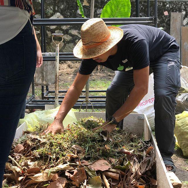 Kitchen Garden From Scraps: #plantfood Turn Organic Scraps Around Your Kitchen And